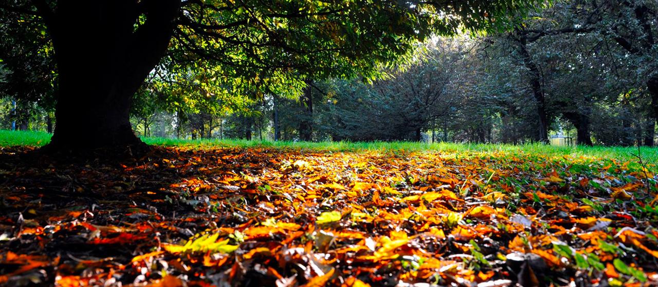 Foliage a Milano, ecco i percorsi per ammirarlo